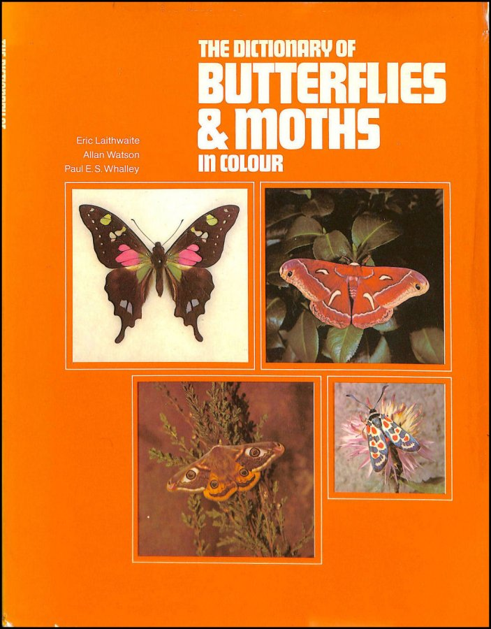 Image for Dictionary of Butterflies and Moths in Colour