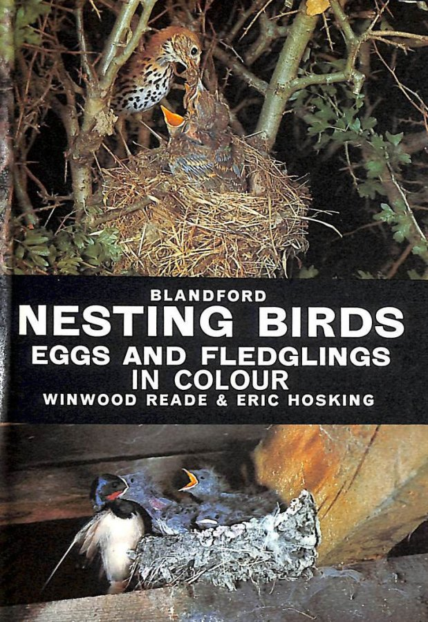 Image for Nesting Birds, Eggs and Fledglings in Colour