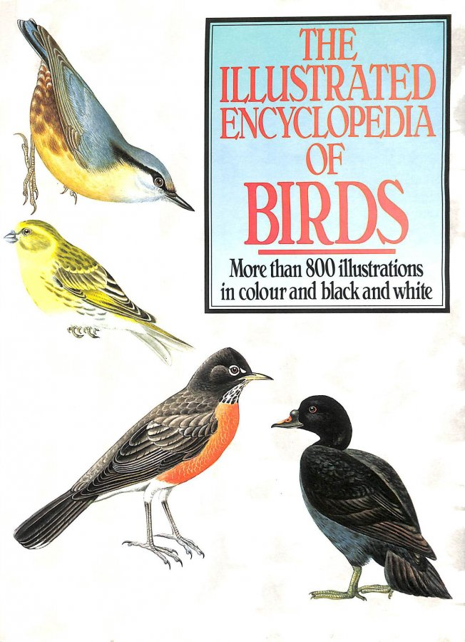 Image for Illustrated Encyclopedia of Birds
