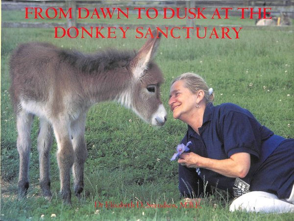 Image for From Dawn to Dusk at the Donkey Sanctuary
