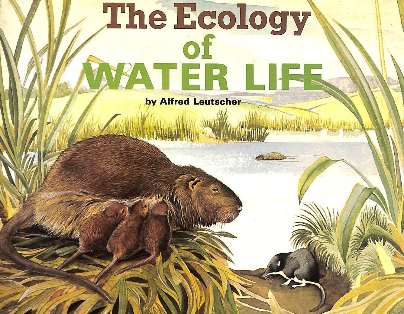 Image for The Ecology of Water Life